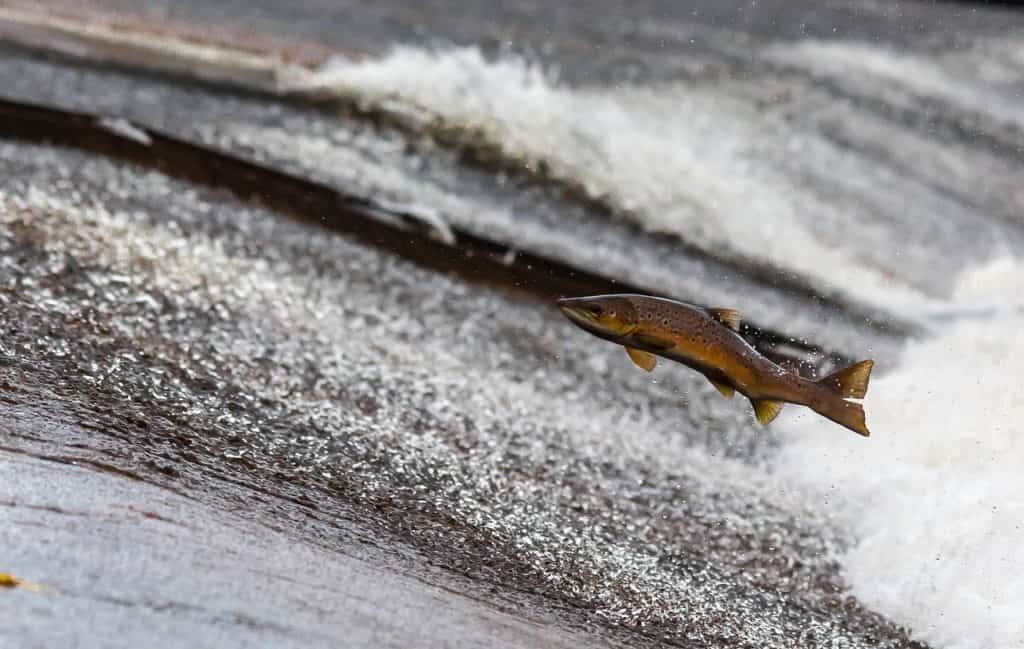 fish jumping successful entrepreneur
